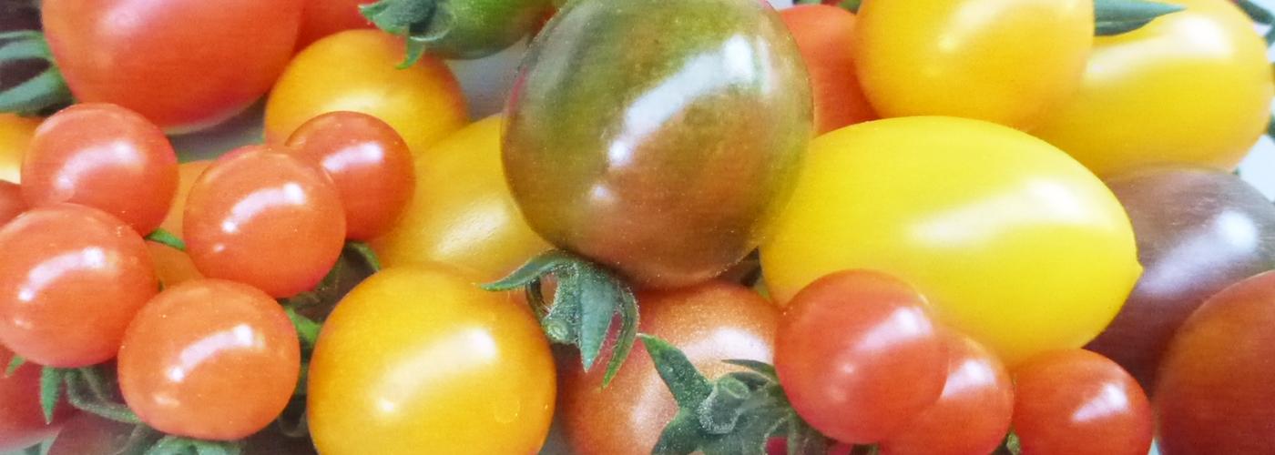 おおにし農園で採れる野菜