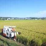 20150929稲刈り2