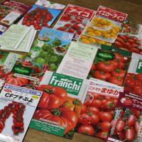 20170127ミニトマト種子